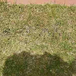芝刈り機の買い増し