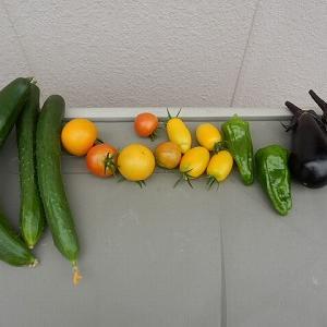 家庭菜園 その2