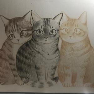 猫とコスモス
