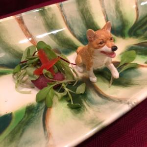 誕生日ディナー 犬編