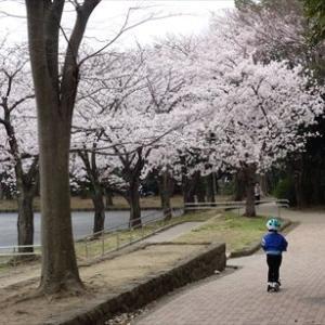 お花見 ~東方公園~