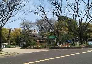 鶴舞公園桜満開 & 多治見駅北口のcafe