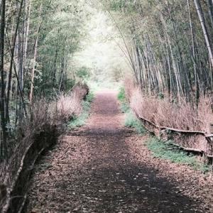 平日の静かな大高緑地公園を通り抜け