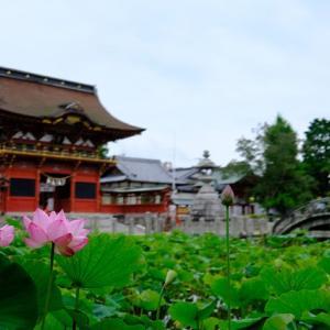 DAHONで行く、茅の輪くぐりの日に咲く、伊賀八幡宮の蓮沼2021その2