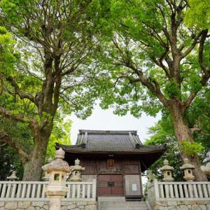 巨樹を尋ねる、村社八幡宮の大楠、SEL24F28G