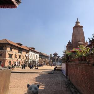 HADA STORE / バクタプル ■ 北印度&ネパール [13] ヨーグルト王!ズーズーダウ