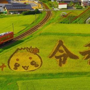 明知鉄道沿線の「田んぼdeアート」