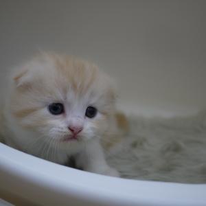 6月16日うまれの子猫