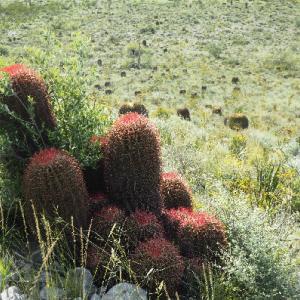 2度目のメヒコ(26)赤鳳の多様な生息地
