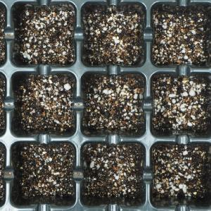 種まき用の土はどんな土?