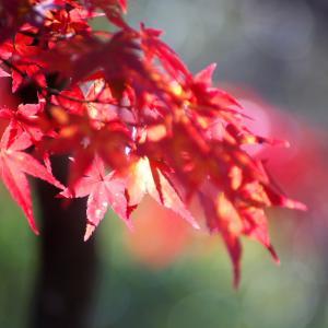 紅葉を撮りに...続き