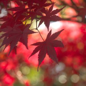 紅葉を撮りに...続きの続き