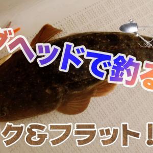 【富山湾】ジグヘッドで釣る!キジハタ、マゴチ、ヒラメ、カサゴ。底をとる事が大切!
