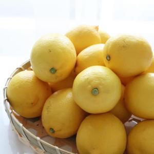 香りに癒やされ♪越冬完熟島レモン