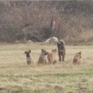 大阪の河川敷にまで、野犬がいるなんて、、、