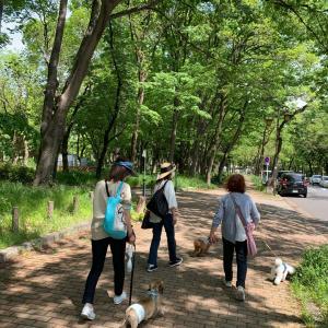 久しぶりの名城公園
