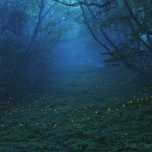 森のともしび