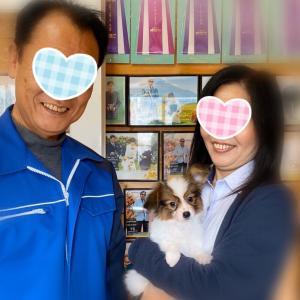 福岡県に旅立ちました パピヨン
