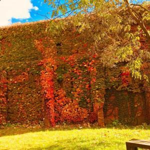 北海道は秋真っ盛り!