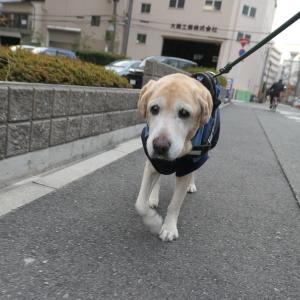 お散歩カメラさん。