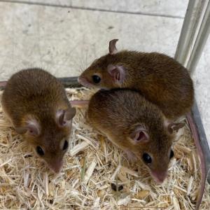 ●小さな小さなネズミ●
