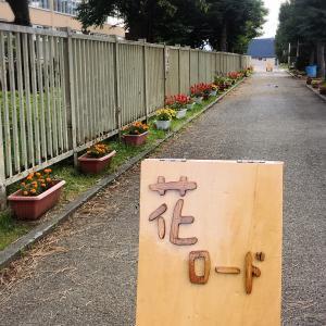 癒されるね♪陵雲小学校の「花ロード」旭川市末広