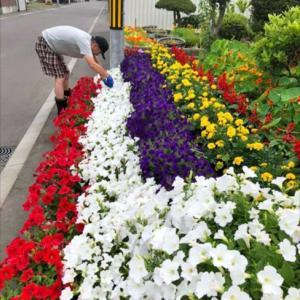 みんなの笑顔の架け橋♪末広東Mさんの虹のお庭♪(旭川市末広東)おらが街の素敵なお庭2020
