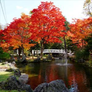 きれい~!北海道護国神社さんの紅葉♪2020/10/20(旭川市)