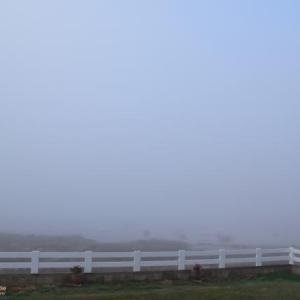 霧に包まれた朝