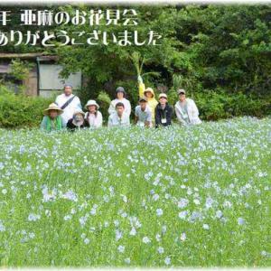 2019『亜麻のお花見会』開催いたしました!