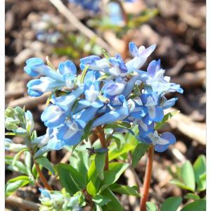 ◆ご近所散歩で見つけた春♬ 小さな春のおすそ分け
