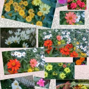 お花さんたち……元気