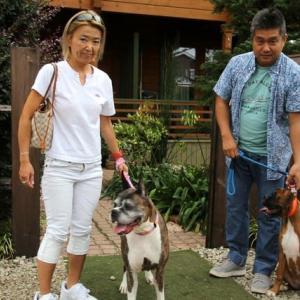 ゲスト犬 来舎(We've got dog visitors)