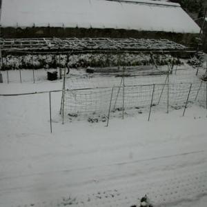 雪景色とカッコいいワン子達(Snow views & cool Dogs)