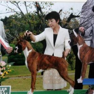 実はメイちゃん、すごいんです(Before she retired, she was a great dog)
