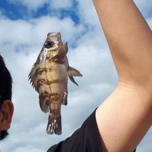 2020/10/25(日)のヨルゴハン 釣り魚
