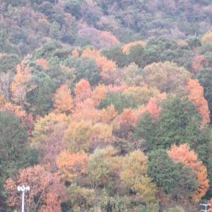 鱗雲山は黄葉ハート型photo五・七・五「調」