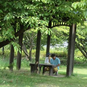 炎天下木陰のベンチ蝉時雨photo五・七・五「調」