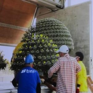 菊花賞パトドック飾る菊の花photo五・七・五「調」