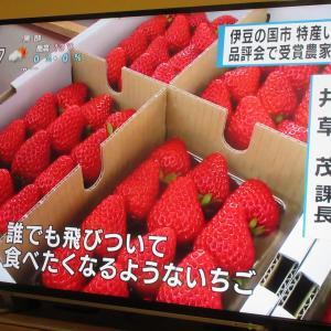 苺の日金賞受賞「キララの香」photo五・七・五「調」