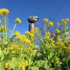 菜の花とペンギン擬きコラボしてphoto五・七・五「調」