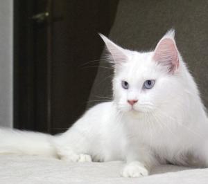 仔猫の性格で遊び惚けるニキータ