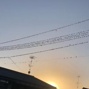鳥がいっぱい