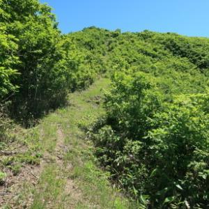 登山口が見つからず森をさまよう:  角ヶ仙その2