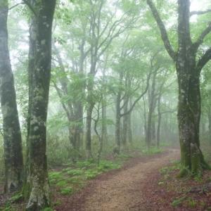 雨の森を歩く: 高清水トレイル