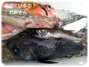 中深場五目釣りに挑戦
