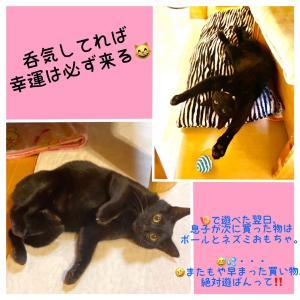 猫騒動 No.5 番外編