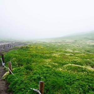 秋田駒ヶ岳&乳頭温泉巡り2020その②『木道を囲むチングルマの花畑』