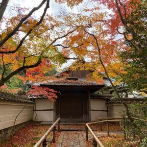 京都 大徳寺塔頭・高桐院と黄梅院の紅葉 2019