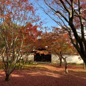 京都 妙覚寺の特別公開・紅葉と御朱印♪